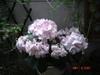 2007_05060053_2